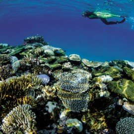 Coral_Reef__and_snorkeler