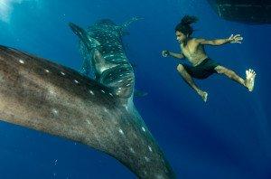 20150811_Whale_Shark_&_local_1821
