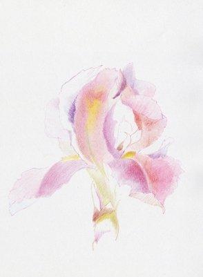 Iris-el-conteiner-2013-Pilar-Flores