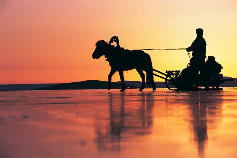 En el invierno se pone a los caballos uñas de hierro que sobresalen de las herraduras para que tengan mejor agarre en el hielo.