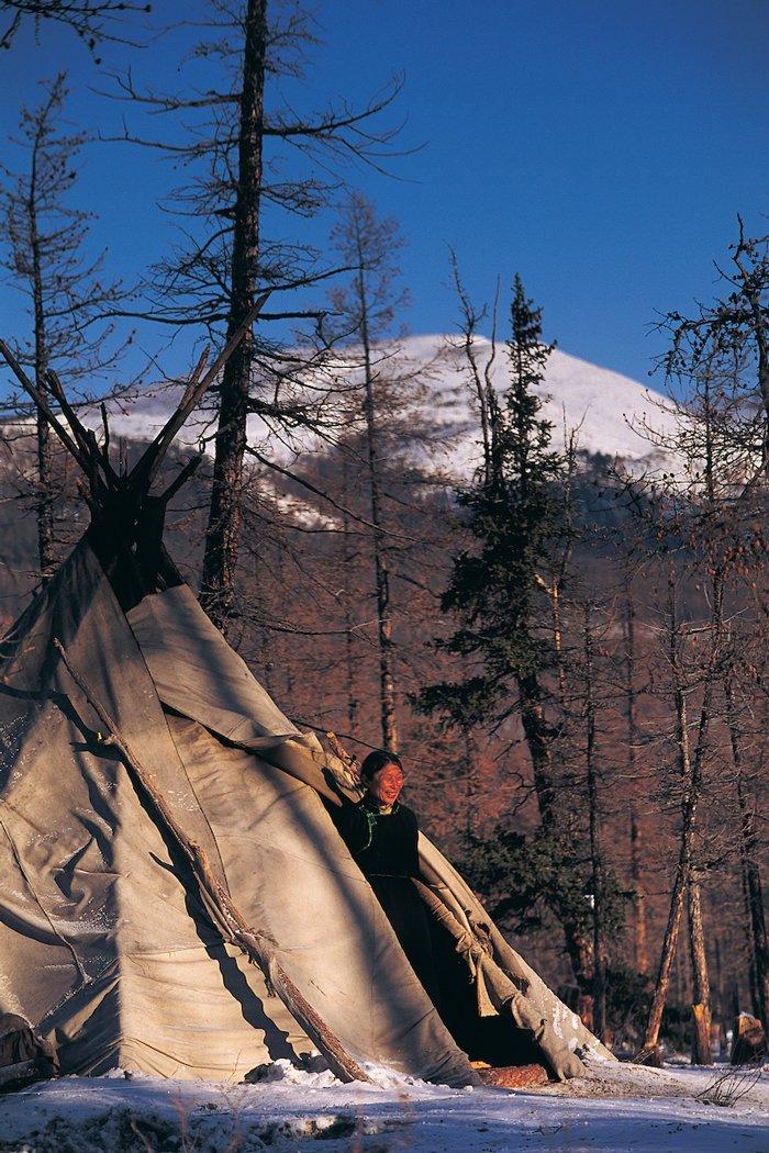 Una mujer tsaatan se asoma en su carpa hecha de piel en el bosque Taiga del norte de Mongolia.  Quedan solo unos pocos cientos de tsaatan, un pueblo seminómada. La mayor parte de su subsistencia depende de los renos.