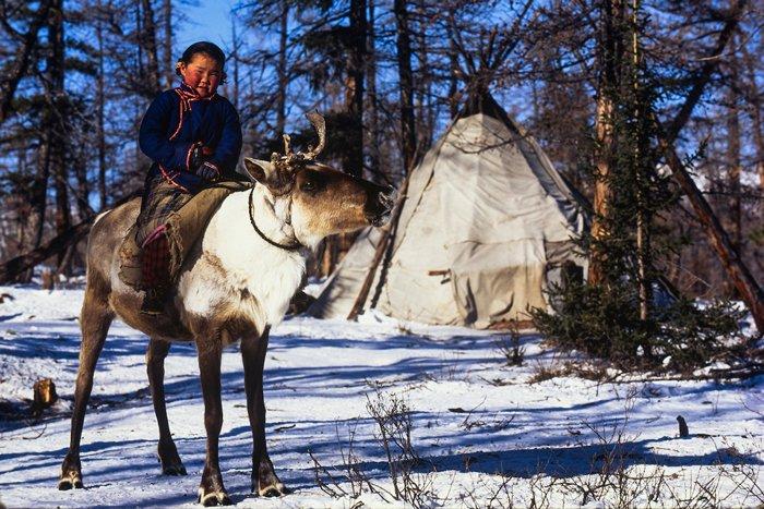 Una joven tsaatan cabalga en su reno. Los tsaatan usan a los renos como otros pueblos usan los caballos. Viajan en ellos, los emplean como animales de carga e incluso cazan a lomo de los renos.